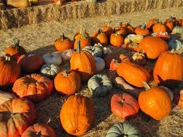 Stanly Lane Pumpkin Patch Napa 2015 by October 2009 Rebeccachapa Com