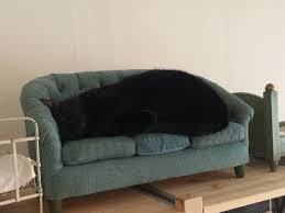 cat sofa sofa for cat aww