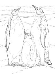 Click To See Printable Version Of Emperor Penguin Family Coloring Page