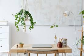 hängende pflanzen als stylisches dekoelement wohnklamotte