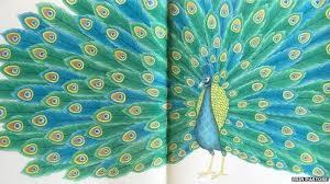 Animal Kingdom Colouring Book Adult Brings Millie Marotta Top 10 Success BBC News
