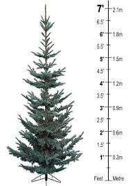 Best Kinds Of Christmas Trees by Types Of Christmas Trees Real Home Decorating Ideas U0026 Interior
