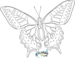 Printable Coloring Pages Adults Only Butterfly