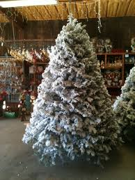Freshly Flocked Real Tree At The Elves Farm Gift Shop We Flock Noble Fir Fraser And Nordmann Firs