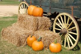 Pumpkin Patches In Okc by Uncategorized Archives The Retreat At Quail North