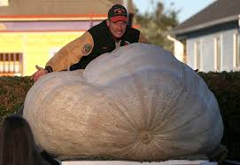 Half Moon Bay Pumpkin Festival Biggest Pumpkin by World U0027s Heaviest Pumpkin Grown In Napa Valley Weighs More Than