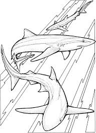 Special Shark Coloring Pages Free 11