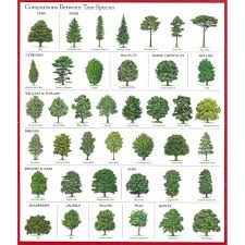 Types Of Christmas Trees With Pictures by With So Many Trees And Shrubs For Gardeners To Choose From It Can