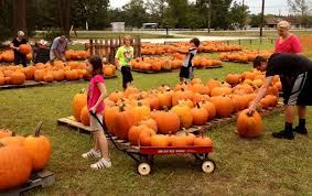 Pumpkin Patch Houston Oil Ranch by Lake Houston United Methodist Church Opens Annual Pumpkin Patch