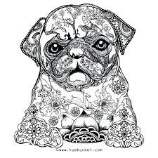 Animal Coloring Pages For Adults Printable Difficult