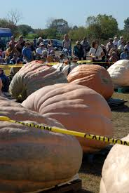 Worlds Heaviest Pumpkin Pie by Giant Pumpkins Archives Page 2 Of 3 Plant Talk