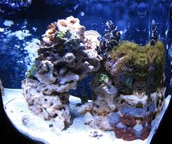 Aquascaping Pictures, Ideas, And Sketches | Page 2 | REEF2REEF ... Is This Aquascape Ok Aquarium Advice Forum Community Reefcleaners Rock Aquascaping Contest Live Rocks In Your Saltwater Post Your Modern Aquascape Reef Central Online There A Science To Live Rock Sanctuary 90 Gallon Build Update 9 Youtube Page 3 The Tank Show Skills 16 How Care What Makes Great Large Custom Living Coral Aquariums Nyc