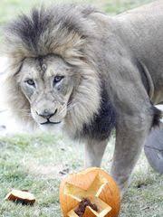 Pumpkin Patch Cincinnati by Pumpkin Patches Halloween Events This Weekend Oct 16 18