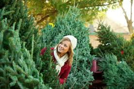 Fred Meyer Ballard Christmas Trees by Christmas Trees At Green Lake To Benefit Pta