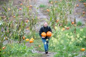 Pumpkin Patch Medford Oregon 2015 by Rain Doesn U0027t Deter Families Hunting For Pumpkins The Columbian