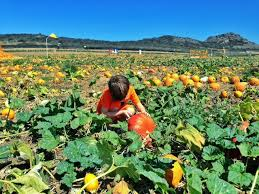 Tanaka Farms Pumpkin Patch Directions by The Best Pumpkin Patches In Orange County Oc Mom Blog Oc Mom Blog