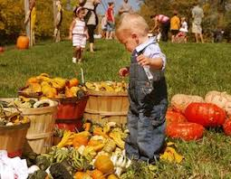 Noblesville Pumpkin Patch by Indianapolis Fall Fun Directory