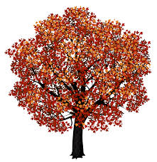 Red Maple Tree PNG Clipart Picture