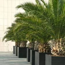plantes méditerranéennes plantes et jardins