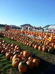 Best Pumpkin Patches Near Milwaukee by Pumpkin Fest We Don U0027t Just Grow Pumpkins We Grow Memories