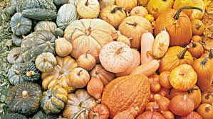 Cinderella Pumpkin Seeds Australia by A Palette Of Pumpkins Martha Stewart
