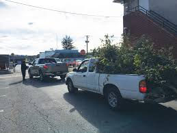 Baltimore County Christmas Tree Pickup 2014 by Kabircares Org It U0027s Our Neighborhood U2013 Let U0027s Take Care Of It