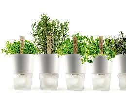 wohnen mit pflanzen cleveres design für zimmerpflanzen