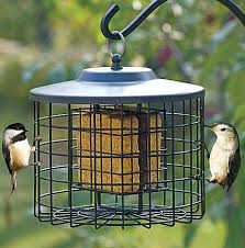Suet Feeder With Guard Medium Image For Wall Mounted Bird Feeder