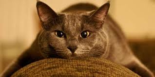 Microfiber Sofas And Cats by Cleaning Microfiber Furniture Furniture