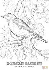 Nevada State Bird Coloring Page