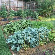 Kale, Beets Growing In The Backyard Garden | Woodleywonderworks ... Garden Center Workshops 2017 Pemberton Farms Marketplace Small Vegetable Design Ideas Designing A With Raised Beds Explore The Backyard Rancho Los Cerritos Historic Site Diy Yard Art And Homemade Outdoor Crafts Earth Day In Be An Friendly Gardener 17 Low Maintenance Landscaping Chris Peyton Lambton Patio Designs Smart Sneaky Storage 41 Stunning Pictures From Tootsie Time I Love Backyard Flower Garden Red Ponds Archives Glenns Gardening Blog Kale Beets Growing Odleynderworks 51 Front