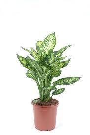 plantes vertes d interieur plante d intérieur laquelle choisir quand on n a pas la
