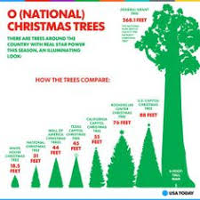 A Tree Mendous Christmas Infographic