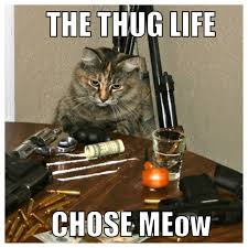 thug cat i wish this was my cat