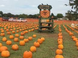 Real Pumpkin Patch Dfw by Flower Mound Pumpkin Patch Home Facebook