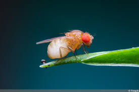kleine fliegen im haus das hilft gegen die minifliegen