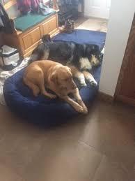 Mammoth Dog Beds by Rudee U0027s Dog Bed Is A Hit U2013 Mammoth Dog Beds Usa