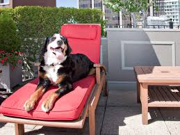 Pampered Pets Bed And Biscuit by America U0027s Best Pet Friendly Hotels Photos Condé Nast Traveler