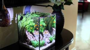 Home Decor : How To Make Fish Tank Decorations At Home Home ... Fish Tank Designs Pictures For Modern Home Decor Decoration Transform The Way Your Looks Using A Tank Stunning For Images Amazing House Living Room Fish On Budget Contemporary In Contemporary Tanks Nuraniorg Office Design Sale How To Aquarium In Photo Design Aquarium Pinterest Living Room Inspiring Paint Color New At Astonishing Simple Best Beautiful Coral Ideas Interior Stylish Ding Table Luxury