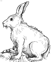 Full Image For Free Printable Bunny Rabbit Coloring Pages Realistic Online