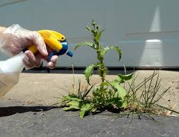 Gloved Hand Using A Spray Bottle To Week Growing In Driveway Crack
