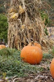 Pumpkin Patches In Shepherdstown Wv by West Virginia 150 Commemorating Statehood West Virginia Public