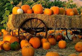 Live Oak Canyon Pumpkin Patch 2015 by Best Pumpkin Patches Of Rancho Cucamonga U0026 The Inland Empire