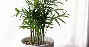 blumenecke stangl topfpflanzen