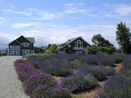 Banana Belt Dreams - Around Guides Spices Herbs Salt Pper Oh My Dungeness Barn House Bed Lavender In Your Garden Breakfast Lilacs Were Glorious This Year Inns Of Exllence 8388 Best Architecture Images On Pinterest Architecture Annual Film Festival Wbbg Spotlight Some Our Bbs Art Our Bb Apron Story And Stylings Picking With Persnicketys Secrets Sequim Near Olympic National Park