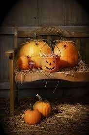 Old Auburn Pumpkin Patch by 423 Best Halloween Pumpkins Jack O Lanterns Images On Pinterest