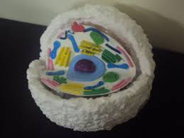 10 Animal Cell Model Ideas Cake Cookies 3D Pizza & How to