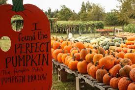 Pumpkin Patch Fayetteville Arkansas by Find Corn Mazes In Piggott Arkansas Pumpkin Hollow In Piggott