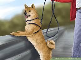 Do Shibas Shed A Lot by 3 Ways To Choose A Shiba Inu Puppy Wikihow