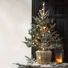 Fraser Christmas Trees Uk by Best 25 Fraser Fir Ideas On Pinterest Christmas Tree Types